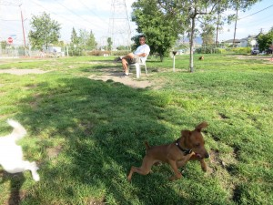 You've complained about cell service at the off-leash dog park.
