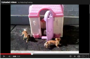While at work, you've watched videos of your dog playing at doggy day care.